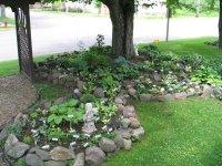 "Hostas: Hosta ""Rock Garden"" zone 4, 1 by GardenGeek_WI"