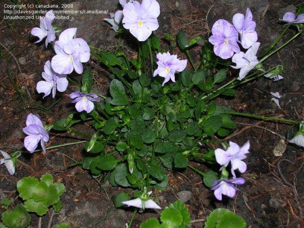 plantfiles perennial