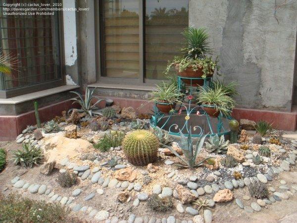 cactus landscape ideas - native