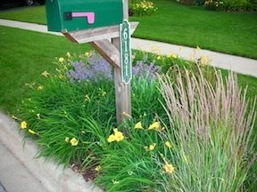 mailbox garden tips - dave's