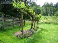 grape vine trellis on Pinterest | Grape Vines, Grape Arbor ...