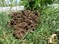 How to get rid of a mole, nice and easy - Dave's Garden