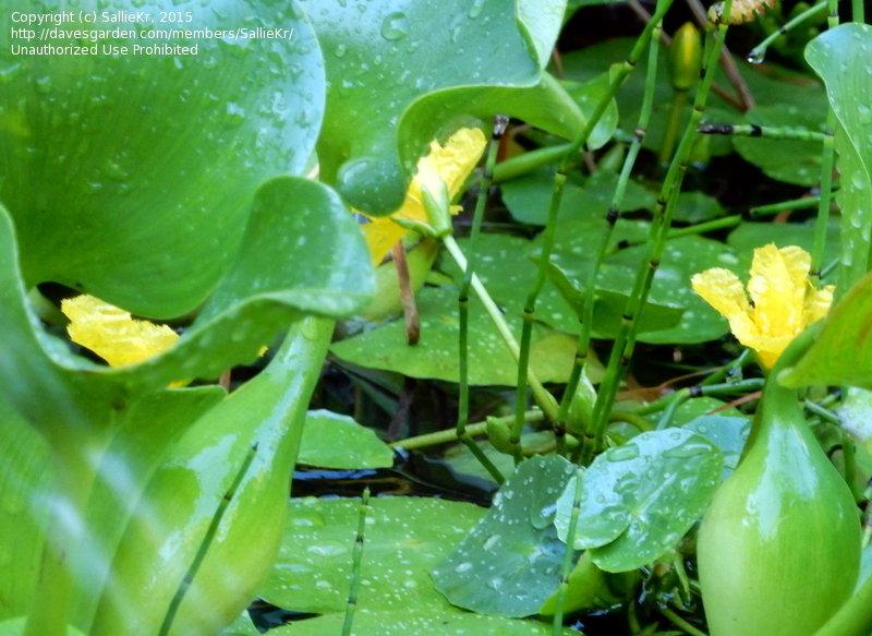Zone 5a Plants