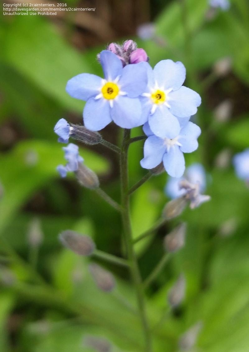 plant identification closed tiny