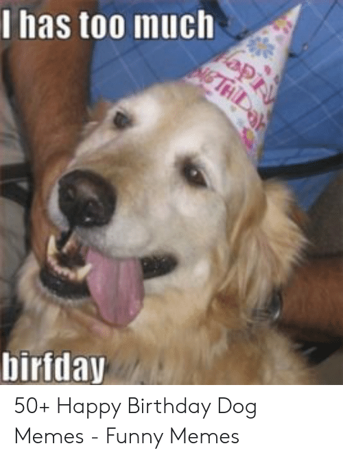 Golden Retriever Birthday Meme : golden, retriever, birthday, 🇲🇽, Memes, About, Golden, Retriever, Birthday