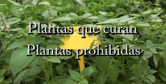 https://i0.wp.com/pics.filmaffinity.com/plantas_que_curan_plantas_prohibidas-480855834-large.jpg