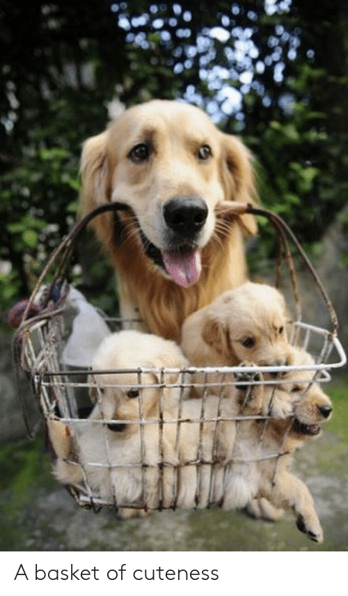 a basket of cuteness
