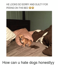 25+ Best Memes About Hate Dog   Hate Dog Memes