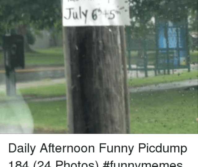Funny Lol And Memes Ard Yard July 6 Daily Afternoon Funny Picdump