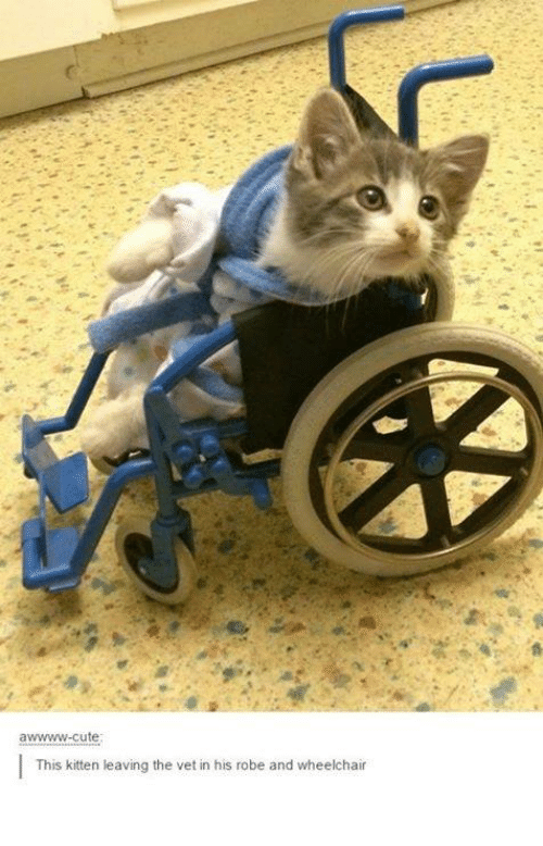 wheelchair for cats chair lift medicare awwwww cute this kitten leaving the vet in his robe and dank kittens