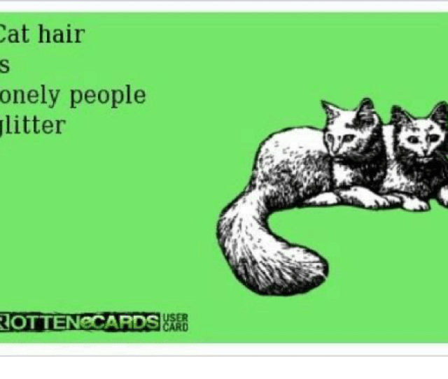 Memes Hair And  F F A  Cat Hair Lonely People Glitter Rottenecards