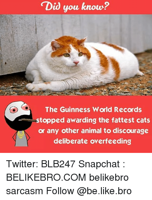 the biggest fattest hairiest world records of 2016 huffpost