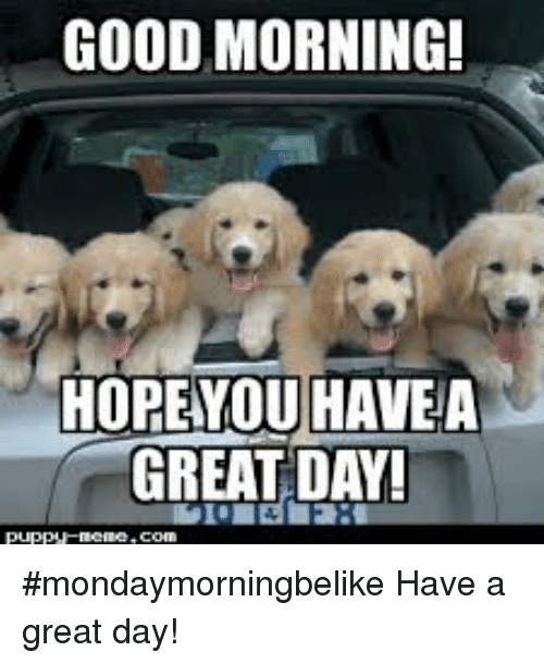 Have A Great Day Meme : great, Great, Quotes