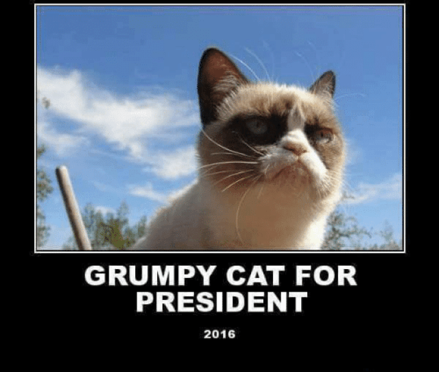 Cats Funny And Meme Grumpy Cat For President  Memes Funny Pics