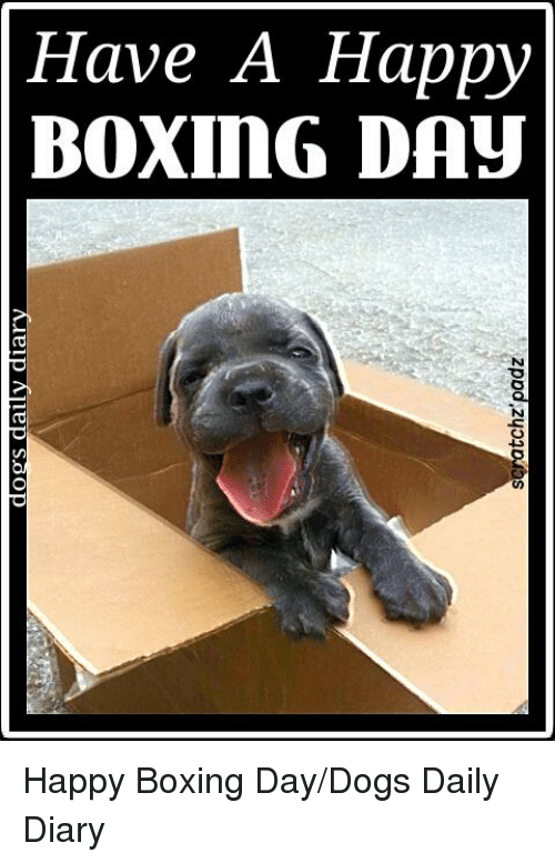 Boxing Day Meme : boxing, Funny, Happy, Boxing