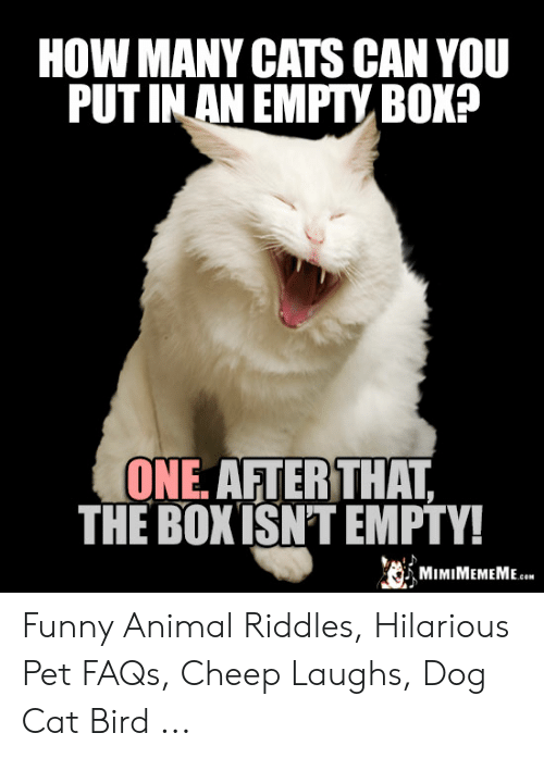 How Many Cats Can You Put In An Empty Box : empty, Riddle, CatWalls