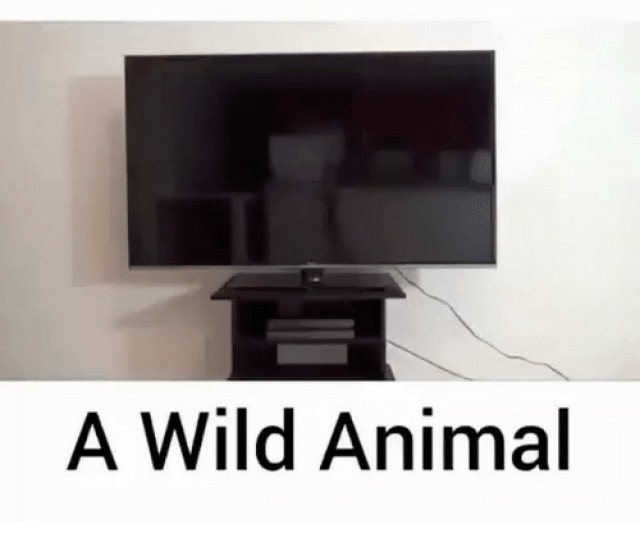 Memes  F F A  And Tamed How To Tame A Wild Animal Follow Gamingclips