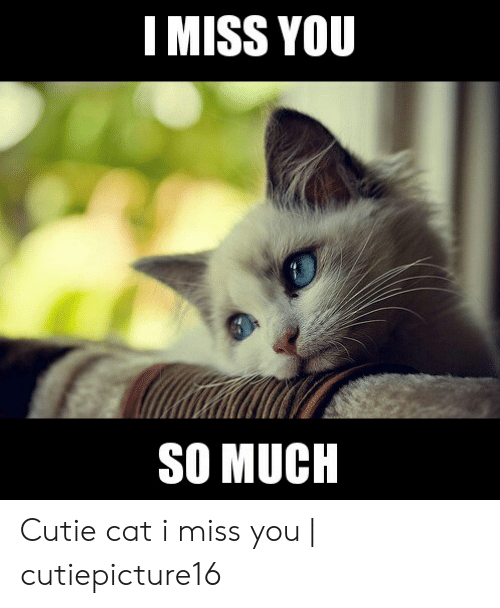 Miss You Cat Meme : Cutie, Cutiepicture16, ME.ME