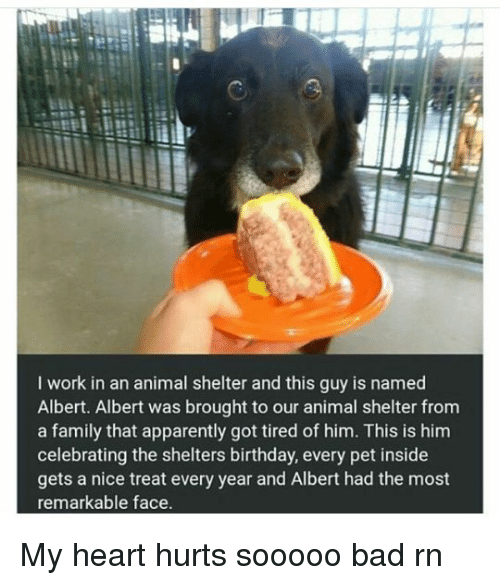 Image of: Pound Apparently Bad And Birthday Work In An Animal Shelter And This Guy Oakland North Work In An Animal Shelter And This Guy Is Named Albert Albert Was