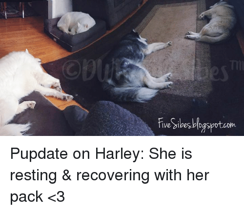 Memes Harley And  F0 9f A4 96 Ive Gibes Dgspot Com Pupdate On Harley