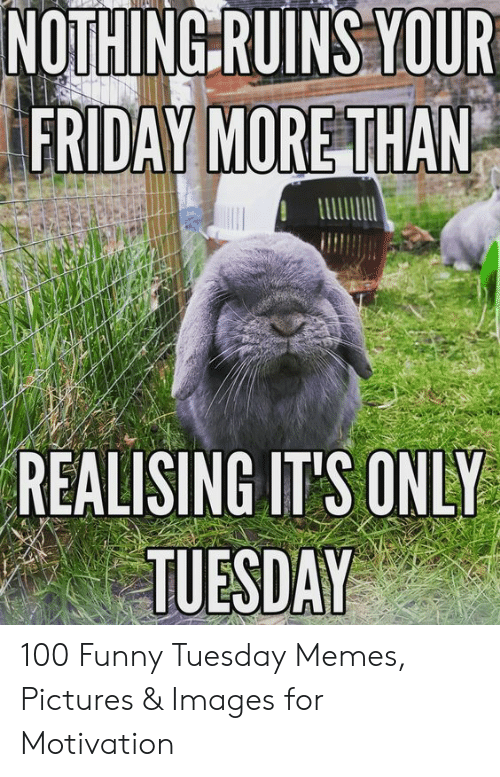 Friday Motivation Funny : friday, motivation, funny, NOTHING, RUINS, FRIDAY, REALISING, TUESDAY, Funny, Tuesday, Memes, Pictures, Images, Motivation, Friday, ME.ME