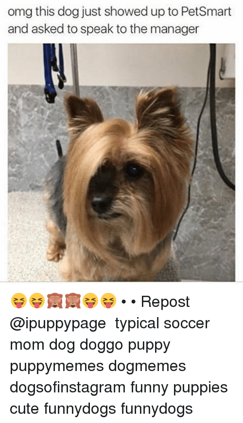 Image of: Pics Cute Funny And Memes Omg This Dog Just Showed Up To Petsmart And Funny Omg This Dog Just Showed Up To Petsmart And Asked To Speak To The