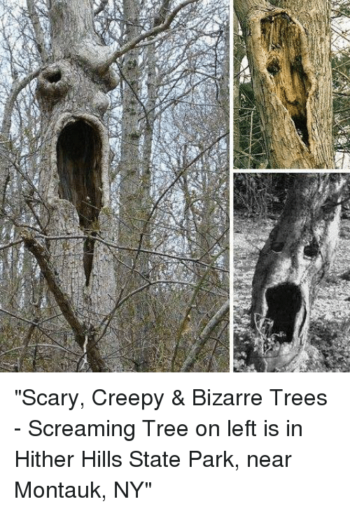 scary creepy bizarre trees