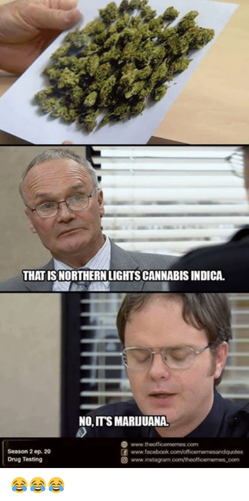 Northern Lights Cannabis Indica Office