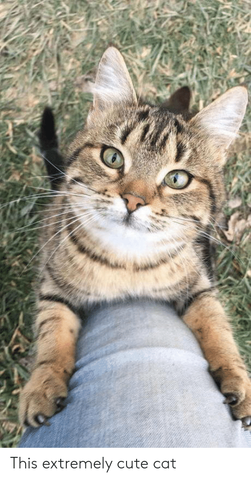 this extremely cute cat