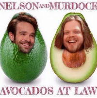 nelson andmurdock avocados at