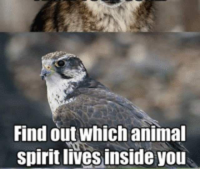 Animals Anime And Native American Release The Beast From Your Soul Find Out