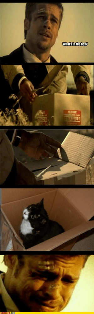Seven What's In The Box Gif : seven, what's, Whats, Memes, Memes,, Seven, Se7en
