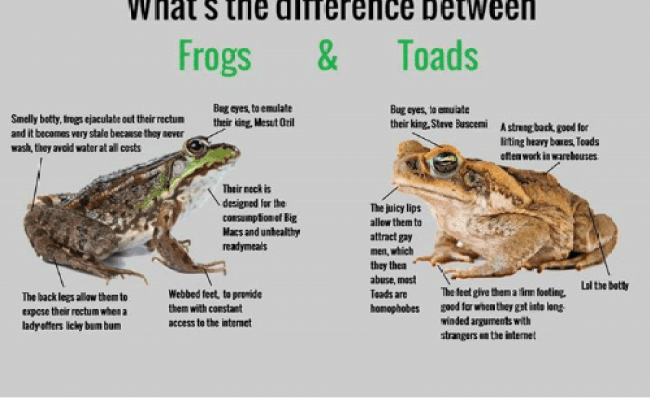 What S The Difference Between Frogs Toads Bug Eyes To