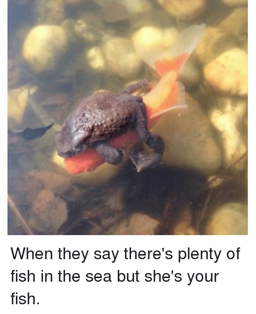 when they say theres plenty of fish in the sea 11198688?resize=500%2C613&ssl=1 cute fish in the sea sayings the best fish 2018