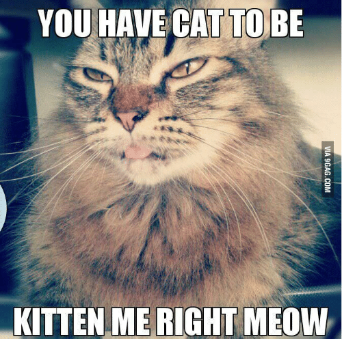 you have cat to