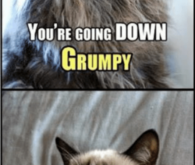 Memes  F F A  And Memes Com Youre Going Down Grumpy History