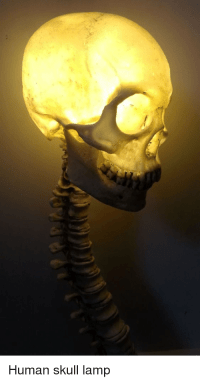 Human Skull Lamp | Dank Meme on SIZZLE