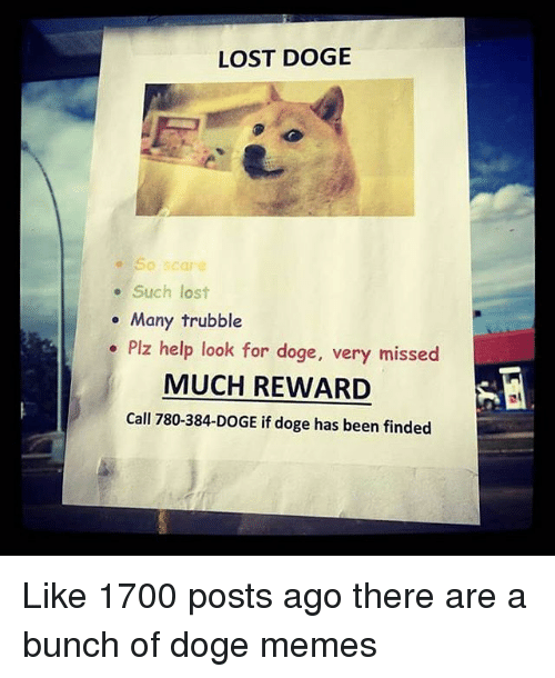 LOST DOGE Such Lost Many Trubble Plz Help Look for Do Very