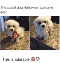 25+ Best Memes About Cutest Dogs | Cutest Dogs Memes
