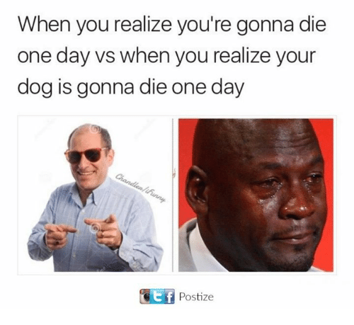 When You Realize Youre Gonna Die One Day vs When You Realize Your Dog Is Gonna Die One Day Tf