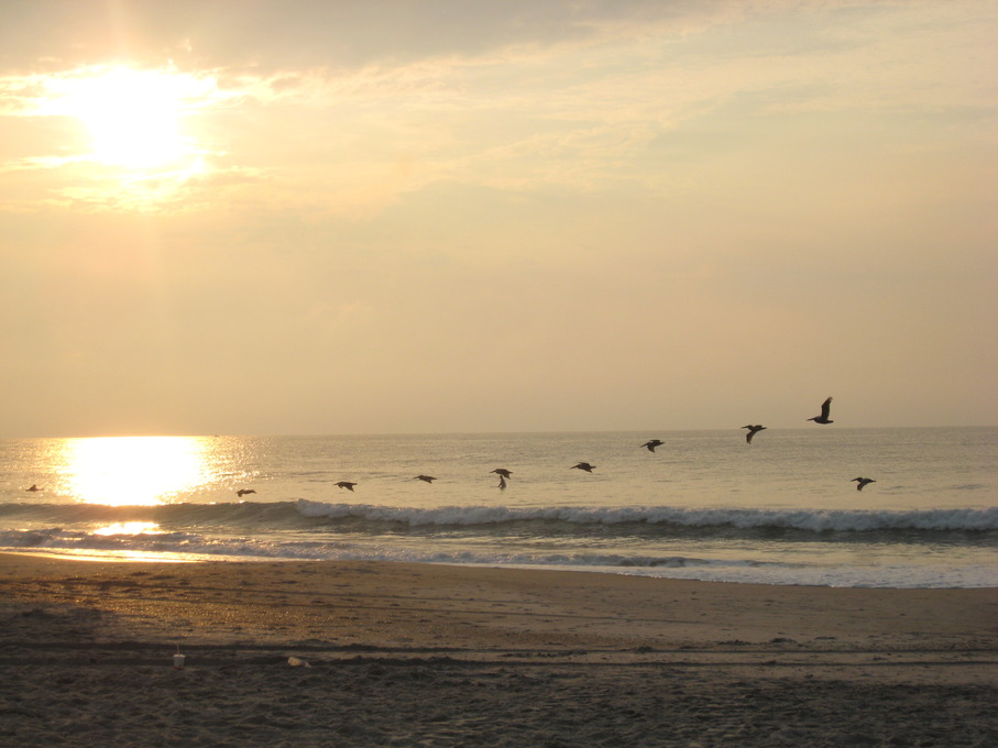 Wrightsville Beach NC Sunrise Pelicans Photo Picture Image North Carolina At
