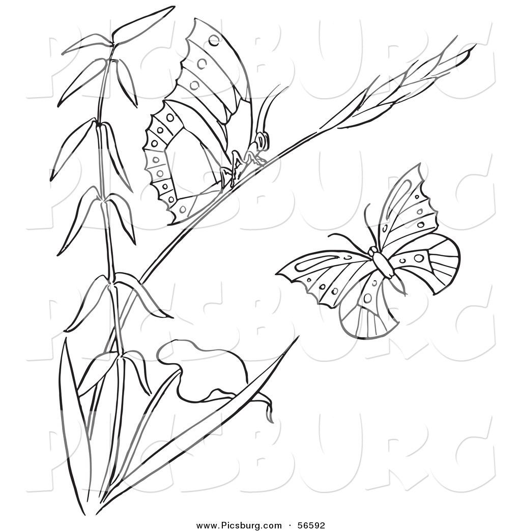 Royalty Free Botanical Stock Designs