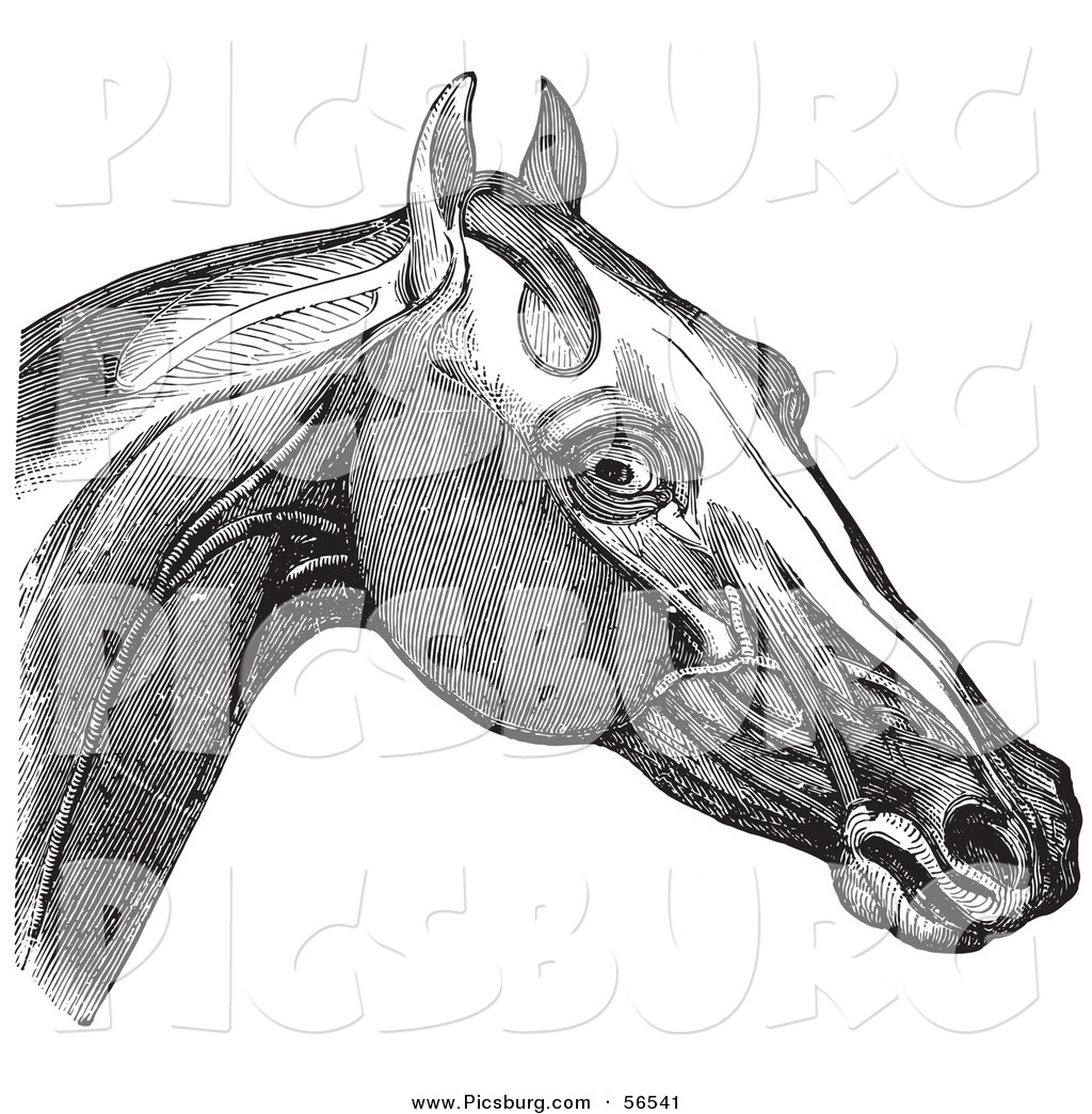 horse anatomy diagram muscles 1990 ford super duty wiring diagrams clip art of a retro vintage engraving 39s head and