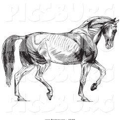 Horse Anatomy Diagram Muscles John Deere L120 Pto Wiring Clip Art Of Walking Black And White By