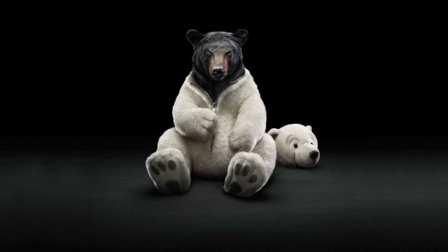 A Wonderful Wallpaper For Bear Disguiser Full Hd Wallpaper