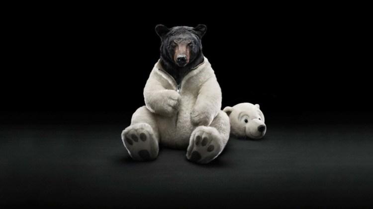 A Wonderful Wallpaper For Bear Disguiser Full Hd Wallpaper