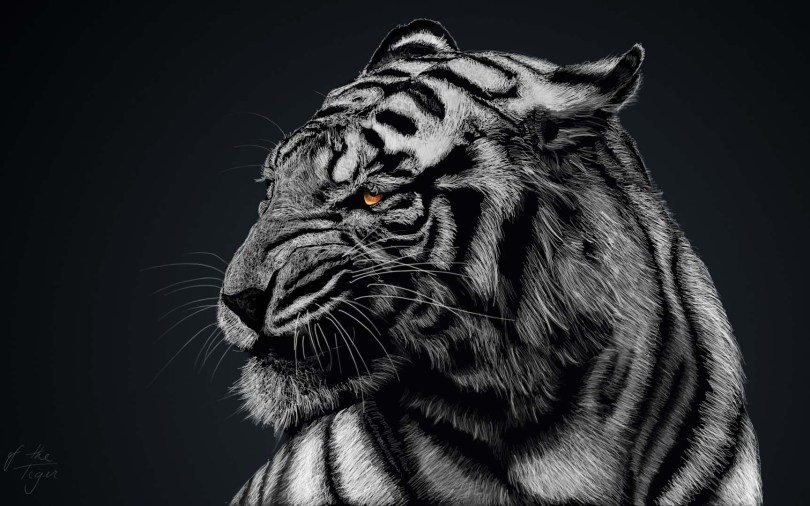 amazing-black-and-white-tiger-hd-wallpaper