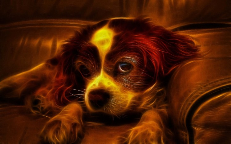 amazing-design-for-a-stunning-dog-in-brown-colour