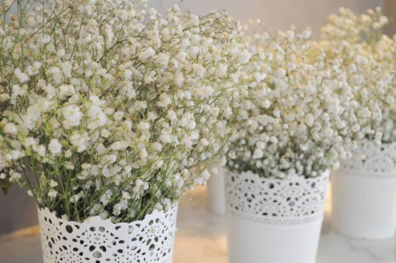 Amazing White Baby's Breath Flower For Decoration