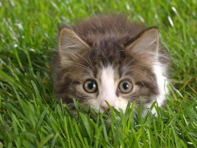 Awesome Shy Cat Slept On The Green Grass HD 4K Wallpaper